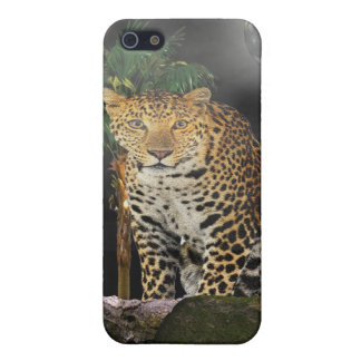 Tiger in the night case for the iPhone 5