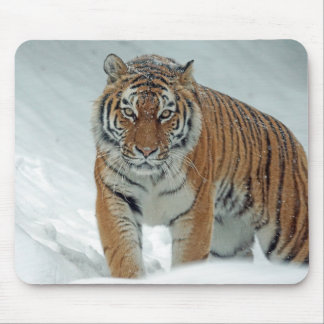 Tiger in the snow mouse pad