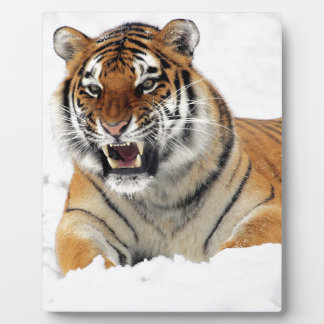 Tiger In The Snow Plaque