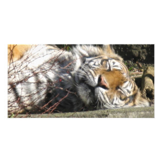 Tiger in the Sun Personalized Photo Card