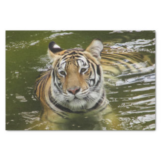 Tiger in the Water Tissue Paper
