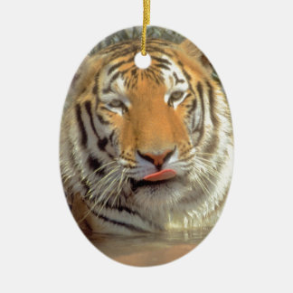 Tiger in water Close Up Ceramic Oval Ornament