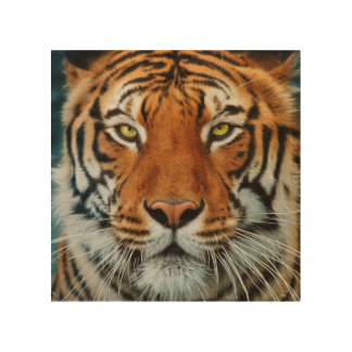 Tiger in Water Photograph Wood Prints