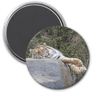 "Tiger ""Lazy Day"" Magnet"