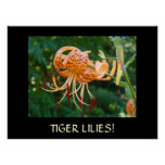 TIGER LILIES Framed Art GIFT Master Gardener Lily