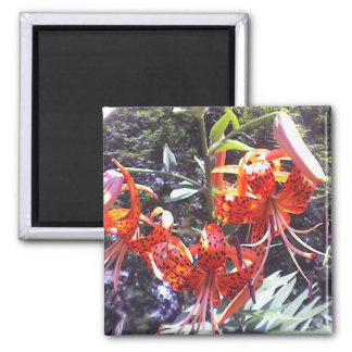Tiger Lily Collection Square Magnet