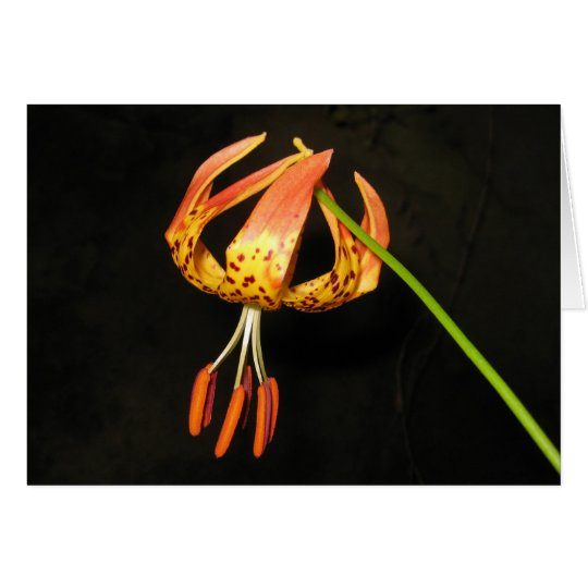 Tiger Lily Note Card