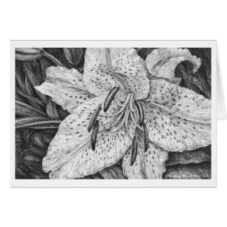 Tiger Lily Pen and Ink Drawing Card