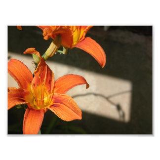 tiger lily print art photo
