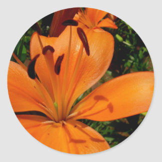 Tiger Lily Round Sticker