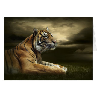 Tiger looking and sitting under dramatic sky card