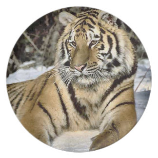 Tiger Lovers Wildlife Plate