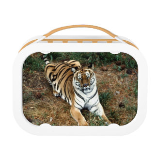 Tiger Lunchboxes