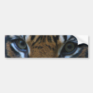 Tiger of eyes bumper sticker