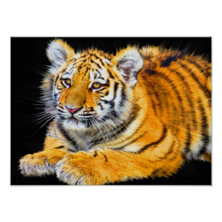 Tiger on Black Poster