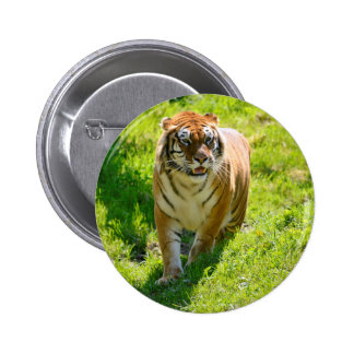 Tiger on grass 2 inch round button
