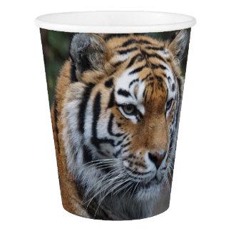 Tiger Paper Cup