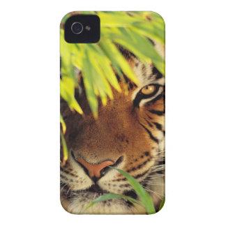 Tiger Peers Behind A Leaf Case-Mate iPhone 4 Cases