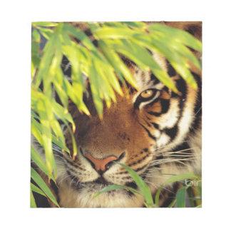 Tiger Peers Behind A Leaf Notepad