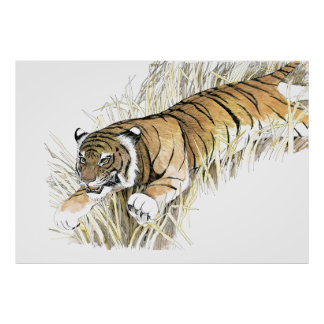 Tiger Posters