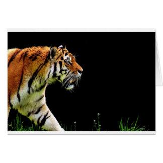 Tiger Predator Fur Beautiful Dangerous Cat Card