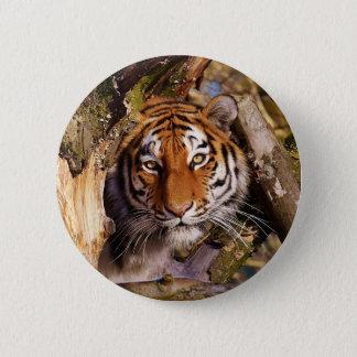 Tiger Predator Lurking Fur Beautiful Dangerous 2 Inch Round Button