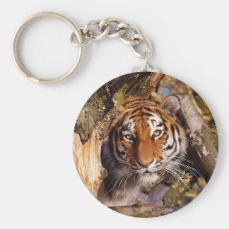 Tiger Predator Lurking Fur Beautiful Dangerous Keychain