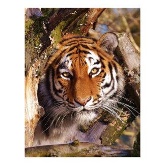 Tiger Predator Lurking Fur Beautiful Dangerous Letterhead
