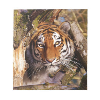 Tiger Predator Lurking Fur Beautiful Dangerous Notepad