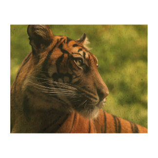 Tiger Cork Fabric