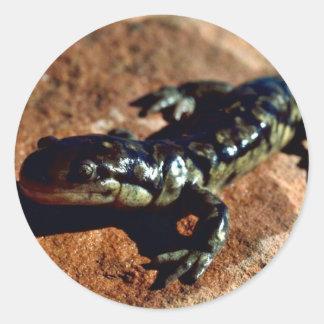 Tiger salamander classic round sticker