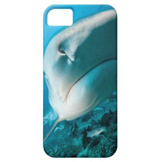 Tiger shark (Galeocerdo cuvier) Shark feed iPhone 5 Case