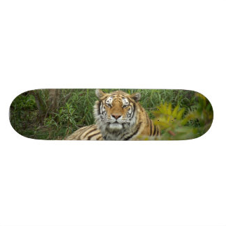 Tiger Skateboard Decks