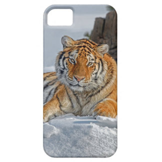 Tiger Snow Portrait iPhone 5 Case