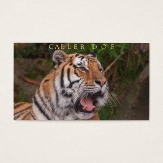 Tiger Square Dance Caller Customizable Card