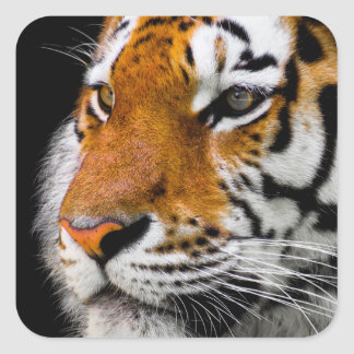 Tiger Square Sticker