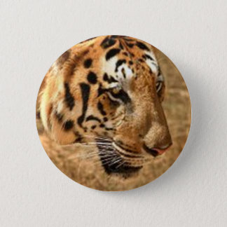 Tiger Stalking in India 2 Inch Round Button
