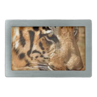 Tiger Stalking in India Belt Buckles