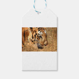 Tiger Stalking in India Gift Tags