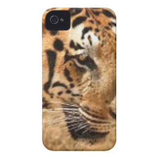 Tiger Stalking in India iPhone 4 Covers