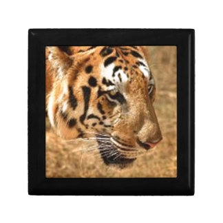 Tiger Stalking in India Jewelry Boxes