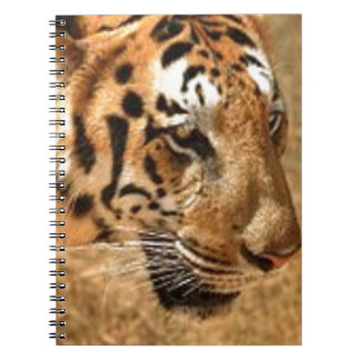 Tiger Stalking in India Notebook