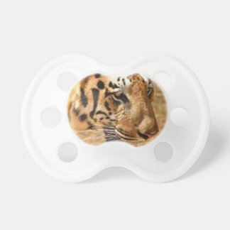 Tiger Stalking in India Pacifier