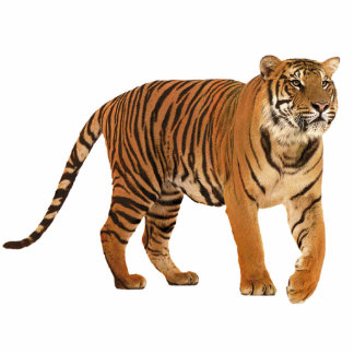 tiger standing photo sculpture