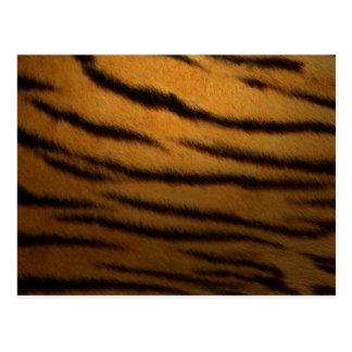Tiger Stripes Post Card