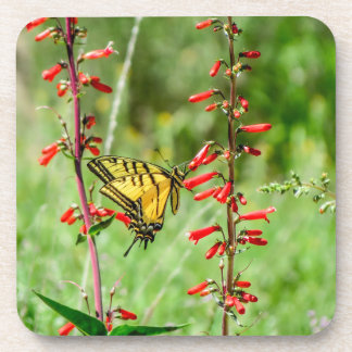 Tiger Swallowtail Butterfly and Wildflowers Coaster