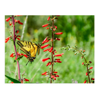 Tiger Swallowtail Butterfly and Wildflowers Postcard