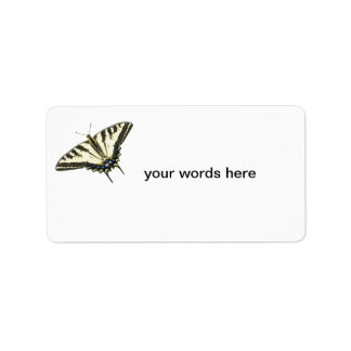 Tiger swallowtail butterfly Lepidopterology