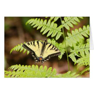 Tiger Swallowtail Butterfly on Fern Card