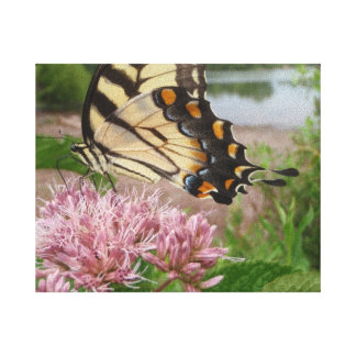 Tiger Swallowtail Butterfly on Milkweed Canvas Print